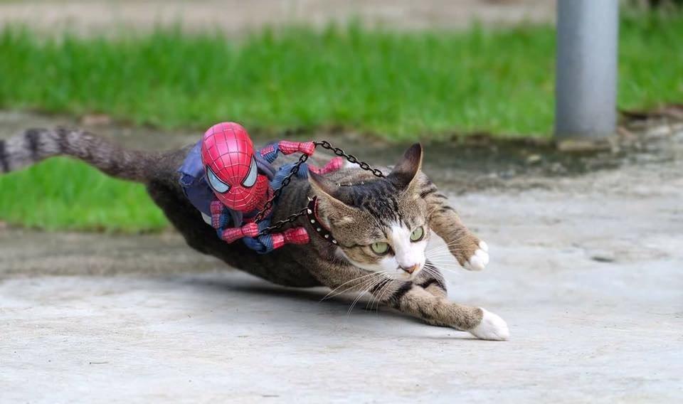 Full bộ ảnh quàng thượng Mèo với người bạn Spiderman và Chó
