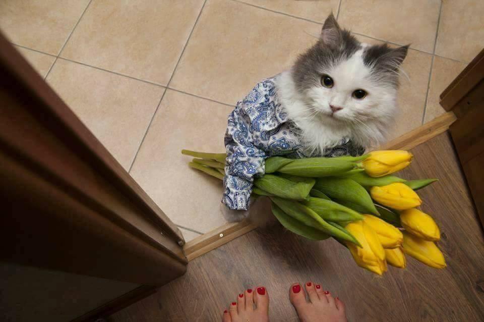 Tổng hợp một số loài Mèo siêu đáng yêu phổ biến